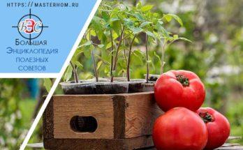 Выбор времени посева овощей на рассаду