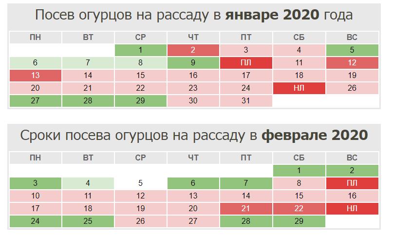 Выращивание огурцов 2020 году